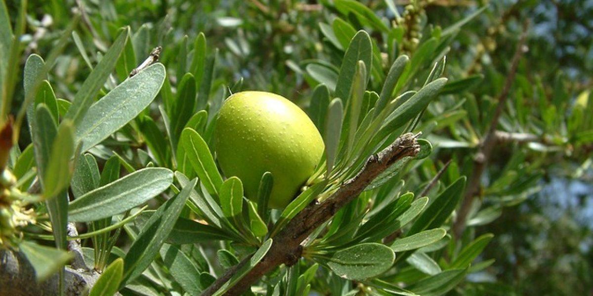 Gommage naturel pour les pieds à l'huile d'amande douce et au citron