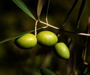 Crème de nuit hydratante, maison, facile, à l'huile d'olive